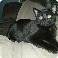 Adopt A Pet :: Jackie - Fargo, ND