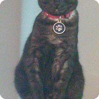 Adopt A Pet :: Morgan - Dallas, TX