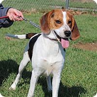 Adopt A Pet :: Johnny Cash - Elyria, OH