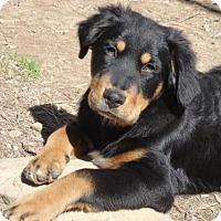 Adopt A Pet :: Paul - Effort, PA