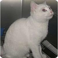 Adopt A Pet :: Azby - Acme, PA