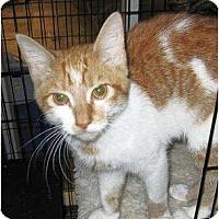 Adopt A Pet :: Drew - Catasauqua, PA