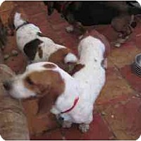 Adopt A Pet :: James - Albuquerque, NM