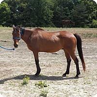 Adopt A Pet :: Slappy - Fredericskburg, VA