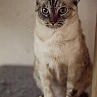 Adopt A Pet :: Jasmine - Midway City, CA