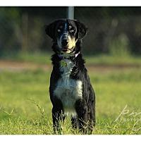 Adopt A Pet :: Benson - Tempe, AZ