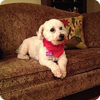 Adopt A Pet :: Rio ~ Pending - Youngstown, OH
