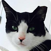 Adopt A Pet :: Gulliver - Brooklyn, NY