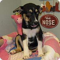 Adopt A Pet :: Sierra - Groton, MA