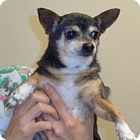 Adopt A Pet :: Cece - Wildomar, CA