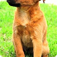Adopt A Pet :: Derby - Glastonbury, CT