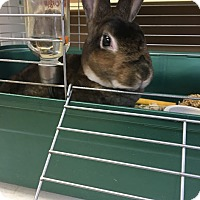 Adopt A Pet :: Mrs. Nibbles - Red Wing, MN