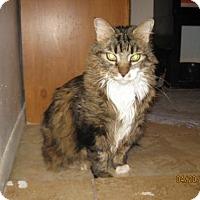 Adopt A Pet :: Gabbi - Glendale, AZ