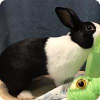 Adopt A Pet :: Higgins - Woburn, MA