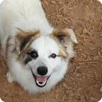Adopt A Pet :: Beckett - Duluth, GA