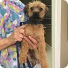 Adopt A Pet :: Scamp