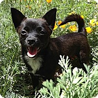 Adopt A Pet :: POSSUM - Tujunga, CA