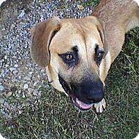 Adopt A Pet :: Sadie - Hagerstown, MD