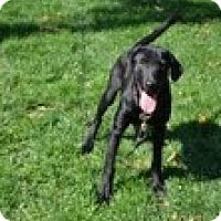 Adopt A Pet :: Blackie - Lewisville, IN