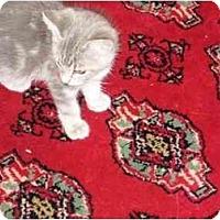 Adopt A Pet :: Jodi - Jeffersonville, IN