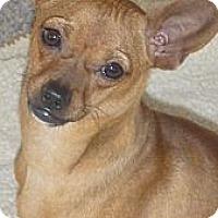 Adopt A Pet :: Linus - Seattle, WA