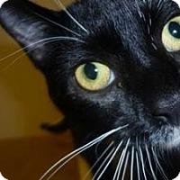 Adopt A Pet :: Kadee - Milwaukee, WI