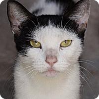 Adopt A Pet :: Lucille - Santa Monica, CA