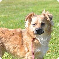 Adopt A Pet :: Milo - Tumwater, WA