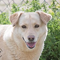 Adopt A Pet :: Sunshine - Iola, TX