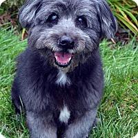 Adopt A Pet :: Shane-Adoption pending - Bridgeton, MO