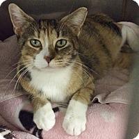 Adopt A Pet :: Macaroni - Byron Center, MI