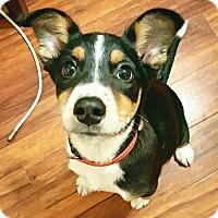 Adopt A Pet :: Otis - Canoga Park, CA