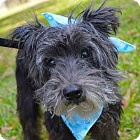 Adopt A Pet :: Goose - Lafayette, LA