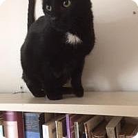 Adopt A Pet :: Tuxedo - Manchester, CT