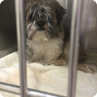 Adopt A Pet :: Frito - Benton, LA