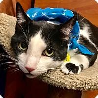Adopt A Pet :: Yang - Long Beach, NY