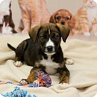 Adopt A Pet :: Jaden - Lexington, TN