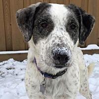 Adopt A Pet :: Sweetpea Wild - Edmonton, AB