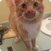 Adopt A Pet :: Hugs - Rochester, MN
