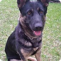 Adopt A Pet :: PRYNCESS - Winnipeg, MB