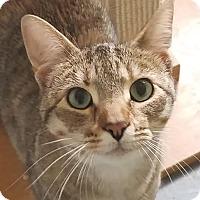 Adopt A Pet :: Buttons - Colfax, IA