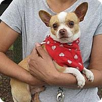 Adopt A Pet :: Jasper NEEDS FOSTER/Adopter - Poulsob, WA