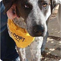 Adopt A Pet :: Cruz - Arlington, TX