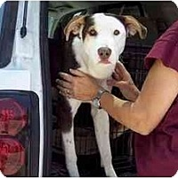 Adopt A Pet :: Cookie - Groveland, FL