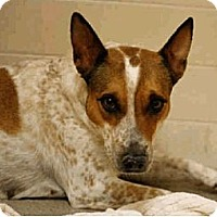 Adopt A Pet :: Cathy - Only $75 adoption! - Litchfield Park, AZ