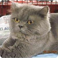 Adopt A Pet :: Chauncey - Riverside, RI
