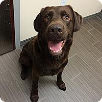 Adopt A Pet :: Bourbon - Cumming, GA