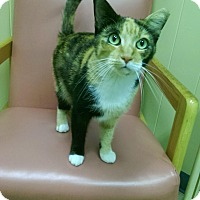 Adopt A Pet :: Ariana Grande - Richboro, PA