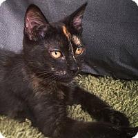 Adopt A Pet :: Dahl - Brooklyn, NY