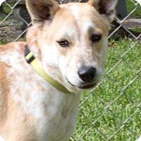 Adopt A Pet :: Lucky - Rockport, TX